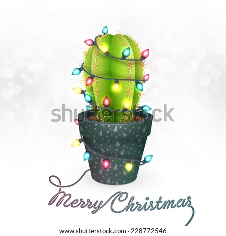 Christmas Cactus Stock Images, Royalty-Free Images & Vectors ...