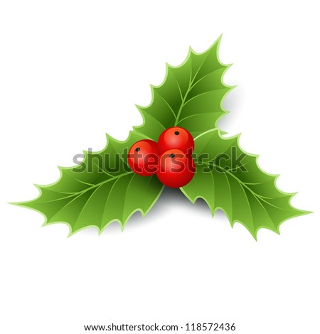 Christmas holly - stock vector