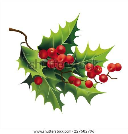 Christmas holly on white. Vector eps 10. - stock vector