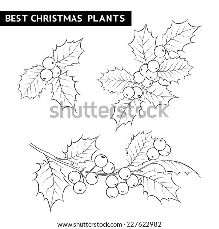 Christmas mistletoe branch pencil drawing. Vector illustration. - stock vector