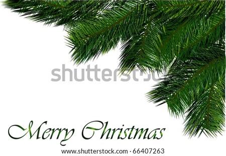 christmas tree branch vector - stock vector