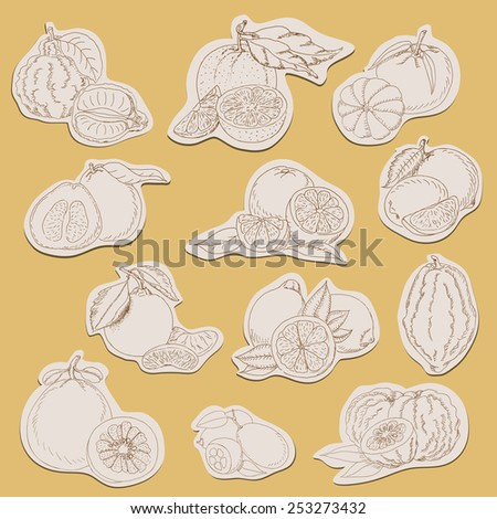 Citrus collection on tags in sketch style. Vector illustration for your design - stock vector