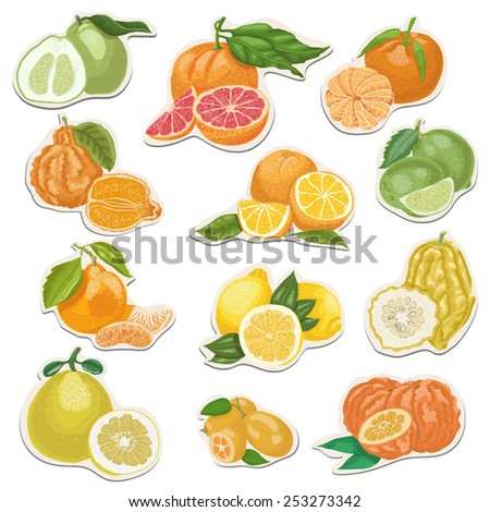 Citrus collection on tags. Vector illustration for your design - stock vector