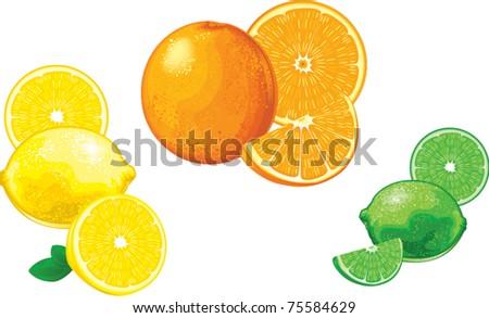 Citrus Fruit - stock vector