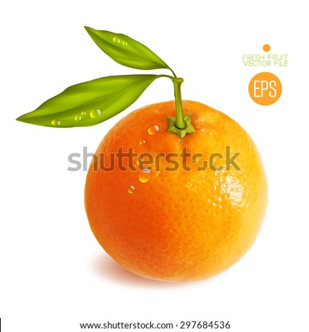 Citrus isolated, beautiful fresh fruit, branch with leaves. Vector realistic art illustration for advertising packaging carton bottle banner wallpaper. Color yellow orange green. Colorful, bright - stock vector