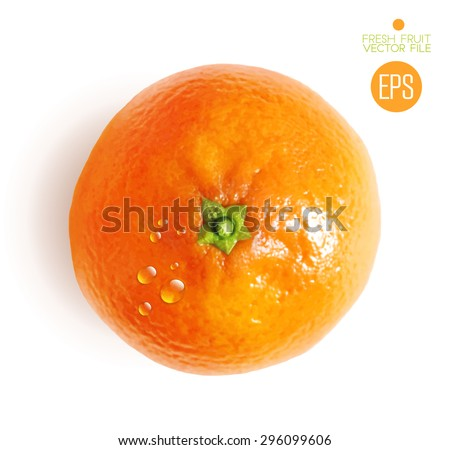 Citrus isolated, top view, beautiful fresh fruit. Vector realistic art illustration for advertising packaging carton bottle banner wallpaper. Color yellow orange green. Colorful, bright - stock vector