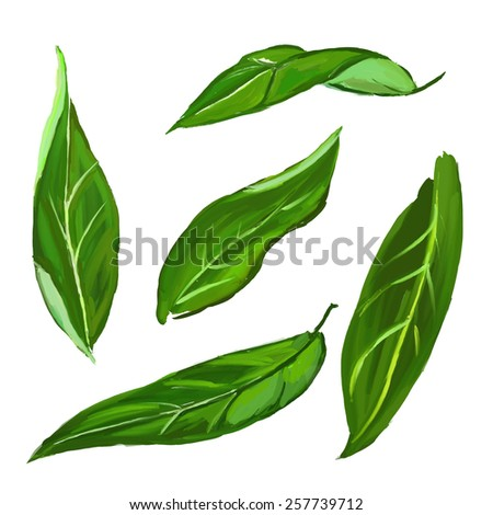 citrus leaves set  vector illustration  hand drawn  painted watercolor - stock vector