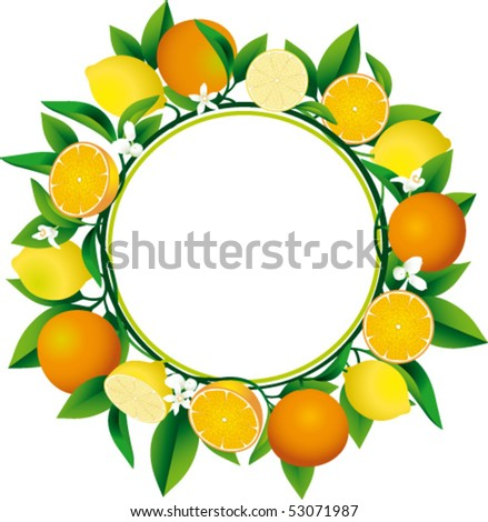 Citrus Wreath - stock vector