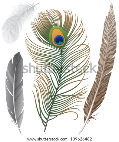 Close-up of 4 bird feathers - stock vector