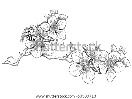 Close up of peach tree flowers in blossom - stock vector