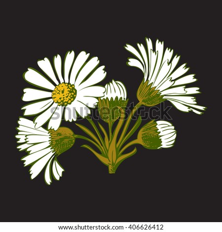 Closeup isolated blooming green floral white spring eco flower organic leaf line vector yellow botanical curve symbol botanic summer pen drawing paint black daisy chamomile ink illustration flora stem - stock vector