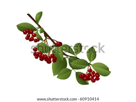 Clusters of succulent red berries on a branch. Vector. Only simple gradients. - stock vector