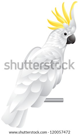 Cockatoo parrot, exotic bird with white plumage and yellow crest vector illustration - stock vector