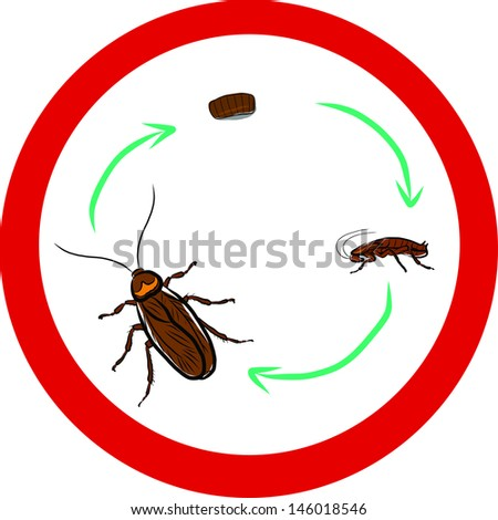 Cockroach life-cycle - stock vector
