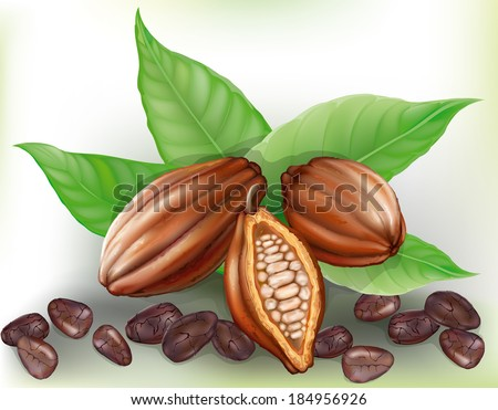 cocoa fruit, cut fruit and grains on a green leaves  - stock vector