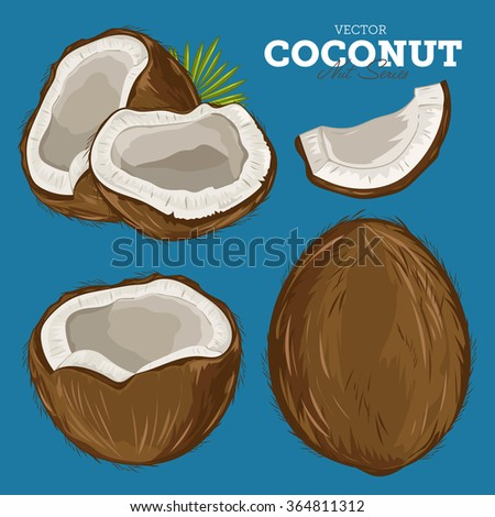 Coconut isolated closeup vector illustration