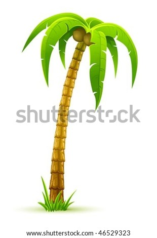 coconut palm tree - vector illustration, isolated on white background