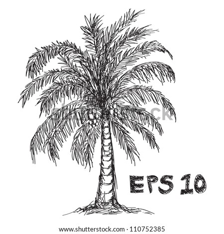 Coconut tree drawing