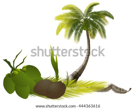 coconut  tree,Palm Trees,silhouettes of trees,tree casts a shadow,Season tree with green leaves,set brightly green tree isolated on white background,Tree with green leafage - stock vector