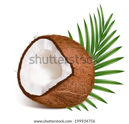 Coconut with leaf. Vector illustration.