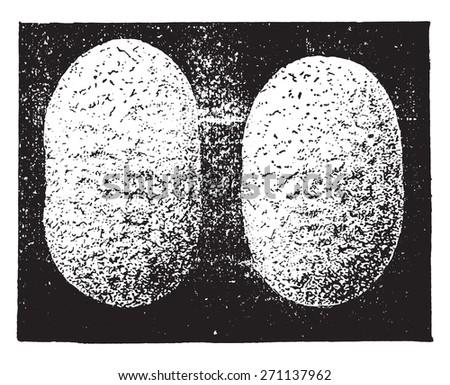 Cocoons, vintage engraved illustration. Industrial encyclopedia E.-O. Lami - 1875.  - stock vector