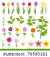 Collection Beautiful Flowers And Grass, Isolated On White Background, Vector Illustration - stock photo
