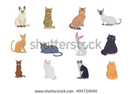 Collection Cats of Different Breeds. Vector isolated cat on white. Vector illustration cats with cute faces - stock vector