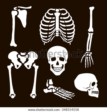 collection human skeleton vector illustration white stock vector, Skeleton
