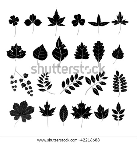 Collection leaves - stock vector