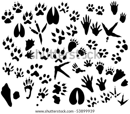 Collection of animal and bird trails - stock vector