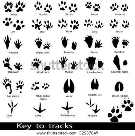 Collection of animal and bird trails with name - stock vector