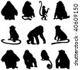 Collection of apes silhouettes. Vector illustration. - stock vector