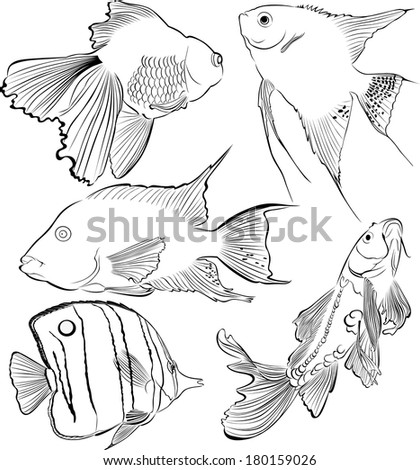 collection of aquarium fish