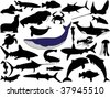 collection of aquatic wildlife vector silhouettes - stock vector