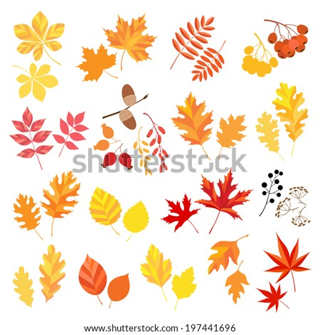 Collection of autumn leaves and berries.  - stock vector