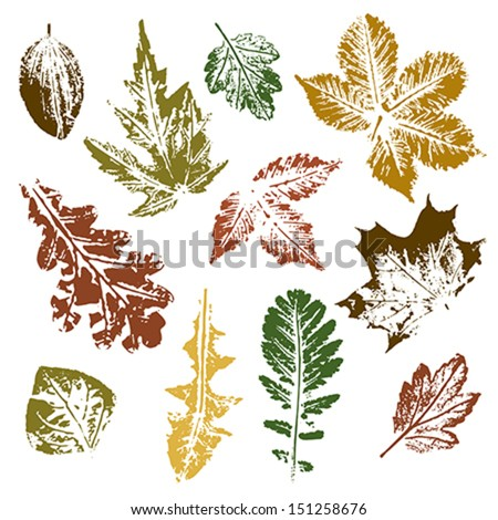 Collection of autumn leaves imprints - stock vector