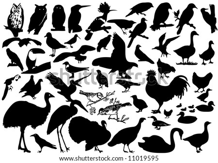 collection of bird silhouette - vector bird