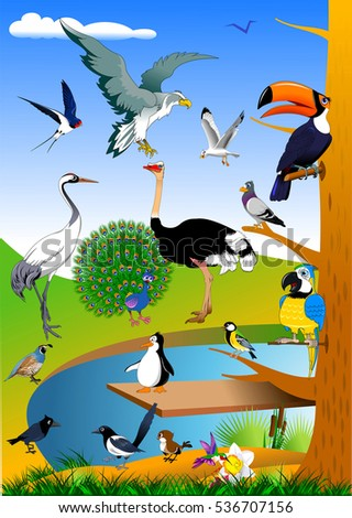 collection of birds in the forest near the green field, vector