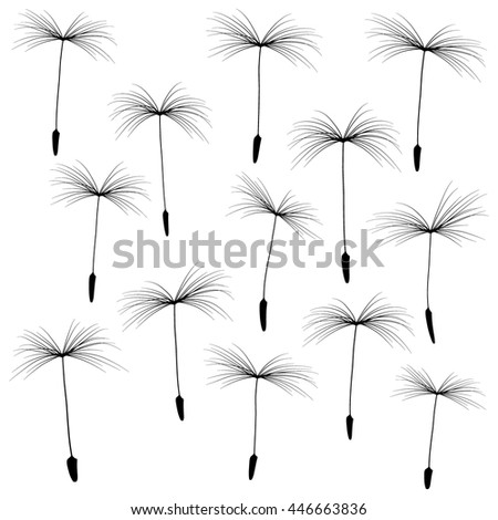 collection of black-and-white fluff of dandelion isolated on white background - stock vector