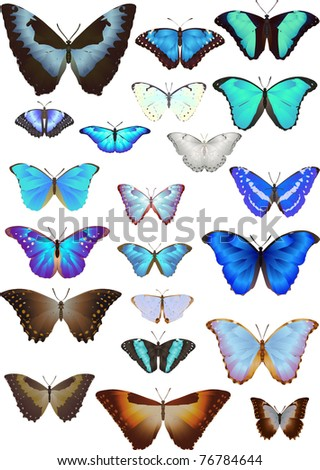 Collection of butterflies: set of morphos