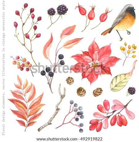 Collection of design floral elements, Redstart bird, flower Poinsettia, Blackberry, Barberry, Rose Hips, pine cones, leaves and  autumn branches. Vector illustration in vintage style.