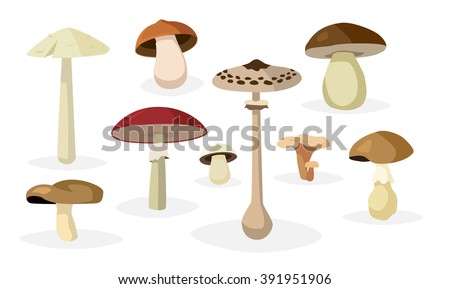 Collection of different edible and poisonous mushrooms illustrations - stock vector