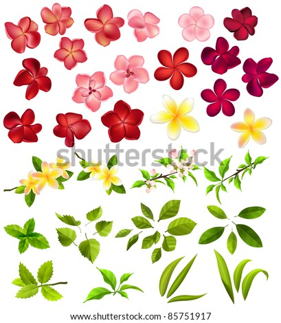 Collection of different flowers and leaves on white - stock vector