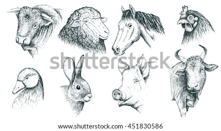 Collection of farm animals .Isolated on white background.Sheep,cow,chicken,pig,horse,rabbit,bull and duck.Vector illustration. Hand drawn style - stock vector
