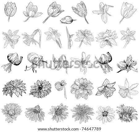 collection of floral sketches - stock vector