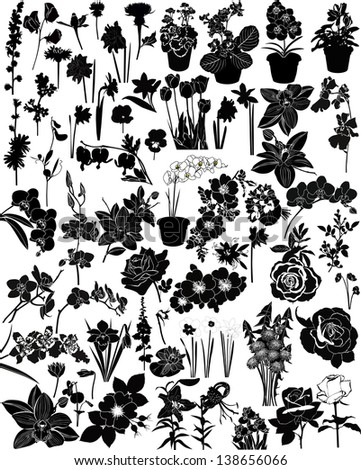 collection of flowers isolated on white background - stock vector