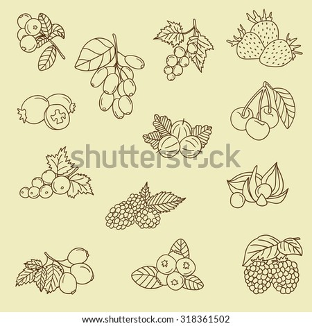 Collection of fresh berries hand drawn icon set. Doodle collection various berries vector