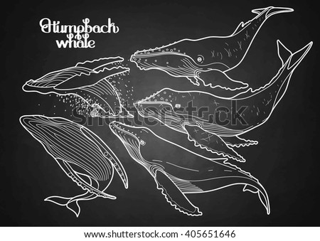 Collection of graphic humpback whales isolated on chalkboard.  Giant sea and ocean creatures in black and white colors - stock vector