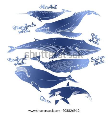 Collection of graphic whales isolated on white background. Vector giant sea and ocean creatures in blue colors - stock vector