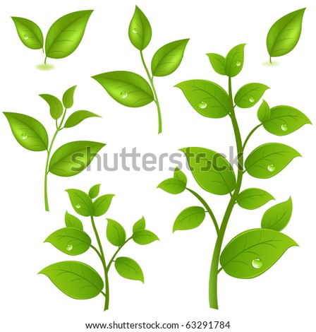 Collection Of Green Branches, Isolated On White Background, Vector Illustration - stock vector